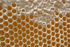 Free Honeycomb Royalty Free Stock Image - 14795156