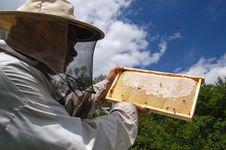 Free Beekeeper Stock Image - 14795371