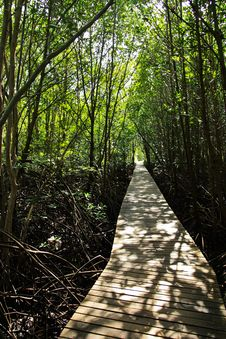 Free Walkway Of Mangrove Forest Royalty Free Stock Images - 14796849