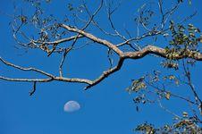 Free Moon Stock Photography - 14797342
