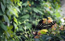 Free Butterfly Stock Photography - 14797482