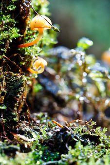 Free Moss And Mushroom Stock Photo - 14798060