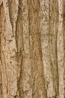 Free Bark Stock Photos - 14799403