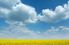 Free Fields Of Gold Royalty Free Stock Photos - 1480408