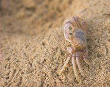 Free Crab Royalty Free Stock Image - 1480996