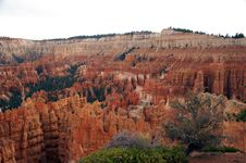 Free Hoodoos In Amphitheater - Bryce Canyon Stock Images - 1481174