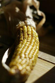 Free Corn Stock Photos - 1481603