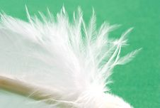 Free Soft As A Feather Royalty Free Stock Photo - 1482075