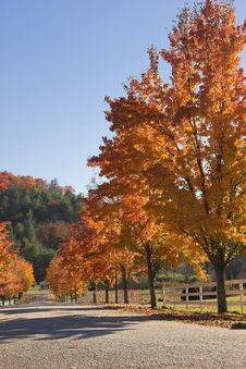 Free Autumn Country Maples Royalty Free Stock Photography - 1483067