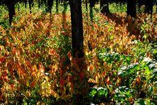 Free Briliant Autumn Morning Stock Images - 1483104