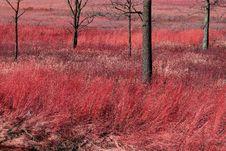 Free Pink Landscape Stock Images - 1483154