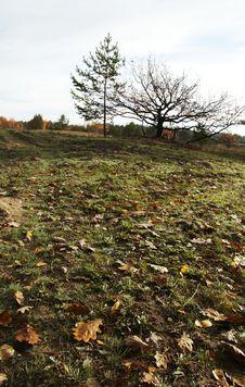 Free Autumn Stock Photo - 1483550
