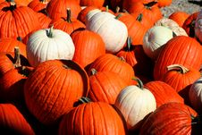 Free Pumpkin Pile Royalty Free Stock Photography - 1485507
