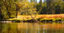 Free Shore Of Merced River In Yosemite National Park Stock Image - 1485861