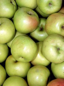 Free Apples Royalty Free Stock Photo - 1486385
