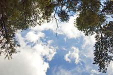 Free Trees And Clouds Royalty Free Stock Images - 1486499
