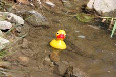 Free Rubber Duck Stock Photography - 1487512