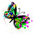 Free Butterfly From Color Splashes Royalty Free Stock Image - 14800086