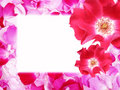 Free Frame From Rose Petals Royalty Free Stock Images - 14807469