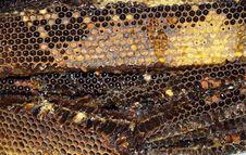 Free Honeycomb Royalty Free Stock Photo - 14801915