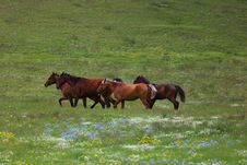 Free Running Horses Stock Image - 14802031