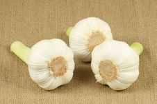 Free Garlic Stock Photo - 14802100