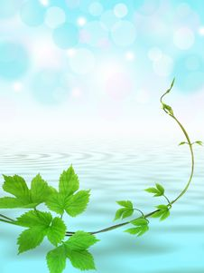 Free Water Background With Twig Stock Photo - 14802300