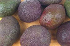 Whole Avocado Royalty Free Stock Images