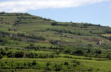 Free Grape Vineyards On A Terraced Hill Stock Photography - 14803262
