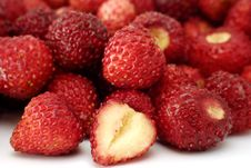 Free Fresh Wild Strawberries Royalty Free Stock Photos - 14803408
