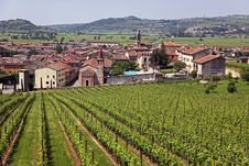 Free Soave In Italy, Famous For Its Wine And Grapes Royalty Free Stock Photos - 14804238