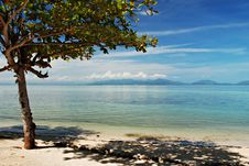 Free Tree On A Beach Royalty Free Stock Photos - 14804328