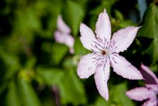 Free Light Pink Flower Background Stock Photo - 14804450