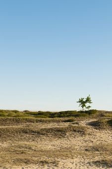 Free Dune Landscape With Lonely Tree Stock Image - 14805381