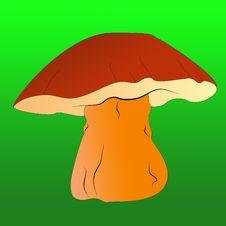 Free Mushroom Royalty Free Stock Photo - 14806275