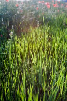 Free Grass Stock Photo - 14806310