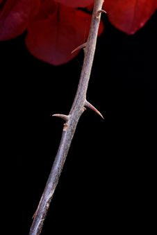 Plant With Thorns Stock Images