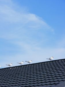 Free Seagulls On Roof Royalty Free Stock Photos - 14806858