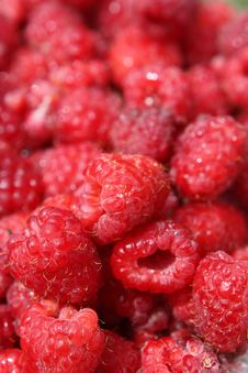 Free Raspberry Close Up Stock Image - 14809231