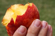 Free Isolated Hand And Peach Stock Photography - 14809342