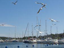 Free The Harbor Royalty Free Stock Photo - 14809465