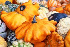 Free Colorful Pumpkins Stock Photos - 14809803
