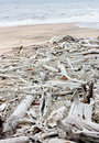 Free Rubbish On The Beach Stock Photography - 14810122