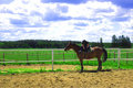 Free Horse And Green Field. Stock Image - 14810951