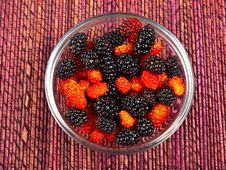 Free Wild Berries Royalty Free Stock Photography - 14810037