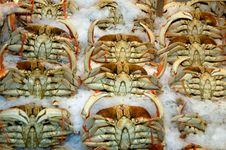 Free Crabs On The Ice Stock Photo - 14810110