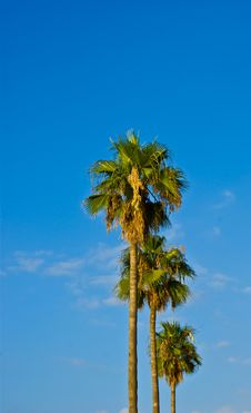 Free Palm Stock Photography - 14810992