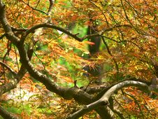 Free Leaves And Tree Branches Royalty Free Stock Photos - 14811158