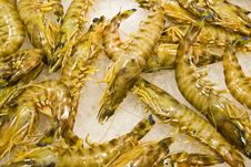 Free The Fresh Shrimps Royalty Free Stock Image - 14812316