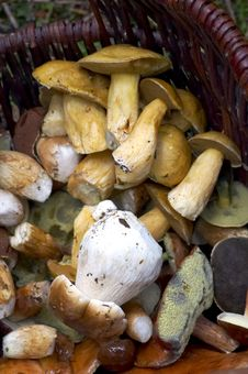 Free Mushrooms Stock Image - 14812641